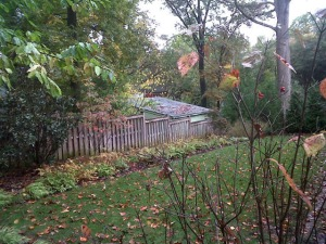 Back yard--before