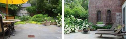 Georgetown garden after